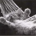 cat-nap-hammock_thumb