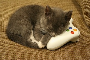 kitten-in-peril-from-xbox-360-controller